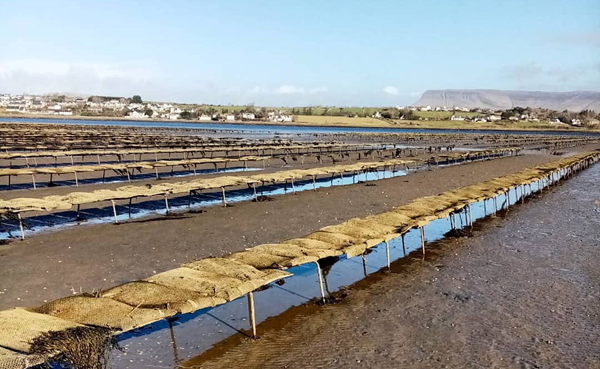 Oysters direct on adapting business during and after the pandemic.